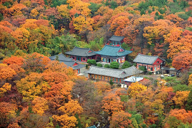 金井山梵魚寺